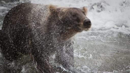 ml_bear_shake