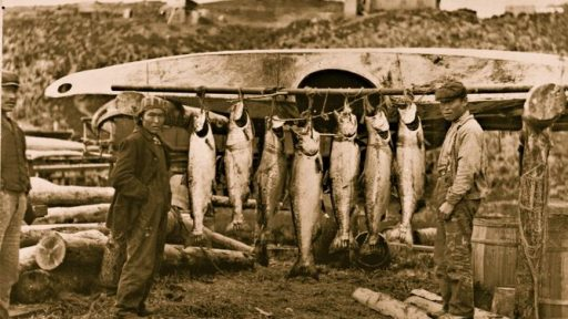 King Salmon at the mouth of the Nushagak River. Photo: Guy F. Cameron (great grandfather Guy Cameron Fullhart Mgr.)