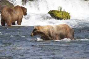Bears at Brooks Falls in Katmai National Park